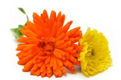 Marigold flowers bouquet Royalty Free Stock Images