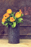 Marigold flowers (Calendula Officinalis) Royalty Free Stock Photos