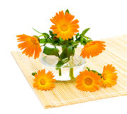 Marigold flowers close up. Calendula flower on a white background Stock Photography