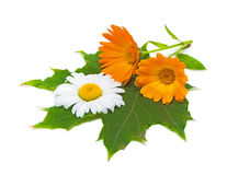 Marigold flowers and daisies on a maple leaf. Closeup on white background Royalty Free Stock Photo