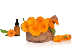 Marigold Flowers and Essence royalty free stock photos