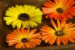 Marigold flowers floating Stock Image