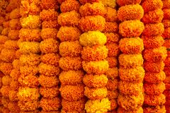 Marigold flowers garland background. Beautiful marigold flowers garland background Royalty Free Stock Image