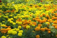 Marigold flowers garland background stock photography