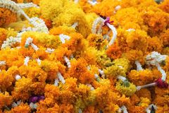 Marigold flowers garland background at hindu temple. Copy space Royalty Free Stock Images