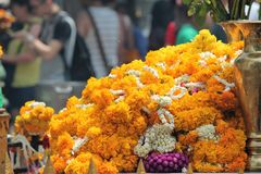 Marigold flowers garland background at hindu temple. Copy space Stock Photography