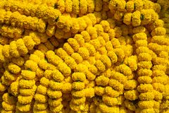 Marigold flowers garland background Stock Images