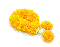 Marigold flowers garland. On white background Stock Photography
