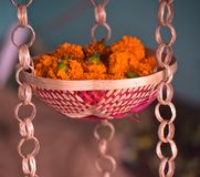 Marigold flowers on a hanging pots stock photograph royalty free stock photos