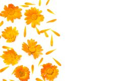 Marigold flowers isolated on white background. Calendula flower top view stock image
