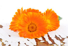 Marigold flowers with leaves Stock Images