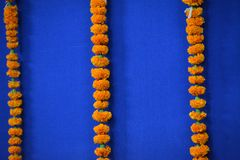 Marigold Flowers For Long Garland. Garland from Marigold flowers. India Marriage decorations. Maharashtra. SD-ART-STUDIO Stock Photo