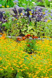 Marigold flowers and other herbs Stock Photography