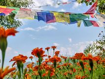 Garden with prayer flags royalty free stock image