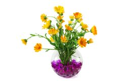 Marigold flowers in a vase Royalty Free Stock Image