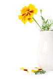 Marigold flowers in vase Stock Photo