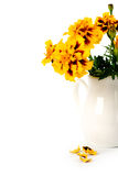 Marigold flowers in vase Stock Photography