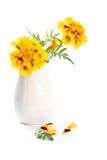 Marigold flowers in vase Stock Photos