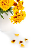 Marigold flowers in vase Royalty Free Stock Photography