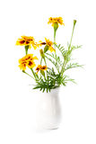 Marigold flowers in vase Royalty Free Stock Images
