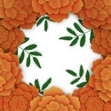 Marigold frame with leaves. Floral background. Marigold frame with leaves. Floral, plant background.Vector illustration  on white Royalty Free Stock Images