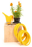 Marigold Garden Tools Royalty Free Stock Image