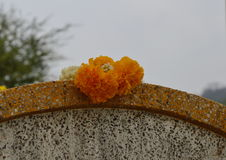 Marigold garland on Chinese tombstone in Qingming festival Royalty Free Stock Photography