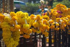 Marigold garland for royal buddha. Marigold Garland at the shrine of the household god Royalty Free Stock Images