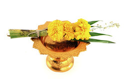 Marigold with golden tray. On white background Stock Image