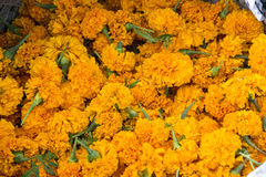 Marigold heads for sale used for Hindu Puja/holy ceremonies. Some Marigold heads for sale used for Hindu Puja/holy ceremonies Stock Images