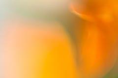 Marigold. Macro abstract shape of marigold flower Stock Photography