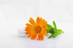 Marigold medical with pills Stock Photos