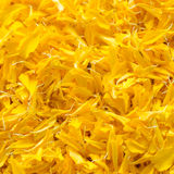 marigold multi petal background Stock Photo
