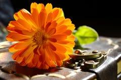Marigold  and notepad Royalty Free Stock Image