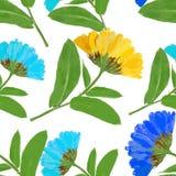 Marigold, officinalis calendula Άνευ ραφής σύσταση σχεδίων προ Στοκ Εικόνες