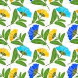 Marigold, officinalis calendula Άνευ ραφής σύσταση σχεδίων προ Στοκ εικόνες με δικαίωμα ελεύθερης χρήσης
