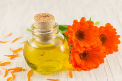 Marigold oil with a fresh flower bouquet. Natural cosmetics royalty free stock photos