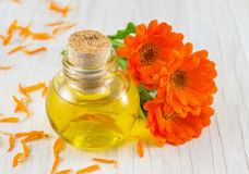 Marigold oil with a fresh flower bouquet. Natural cosmetics stock image