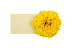 Marigold with paper sheet Royalty Free Stock Photos