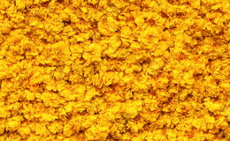 Marigold Petals background Royalty Free Stock Image