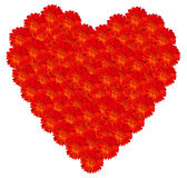 Marigold Red Heart Full Stock Images