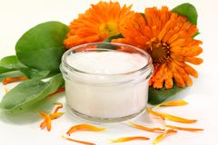 Marigold salve Stock Photography