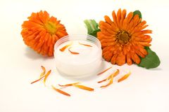Marigold salve with petals. Marigold salve with flowers, leaves and petals on a bright background Stock Photo