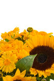 Marigold and sunflowers Royalty Free Stock Photo