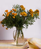 Marigold on a table Stock Image