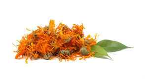 Marigold tea Stock Photos