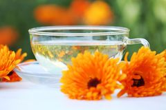 Marigold tea Royalty Free Stock Photography