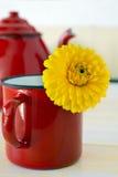 Marigold tea Royalty Free Stock Photos