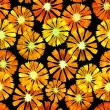 Marigold Watercolor σχέδιο Στοκ φωτογραφίες με δικαίωμα ελεύθερης χρήσης
