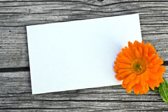 Marigold. And white card on wooden table royalty free stock images